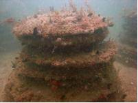 burial reef